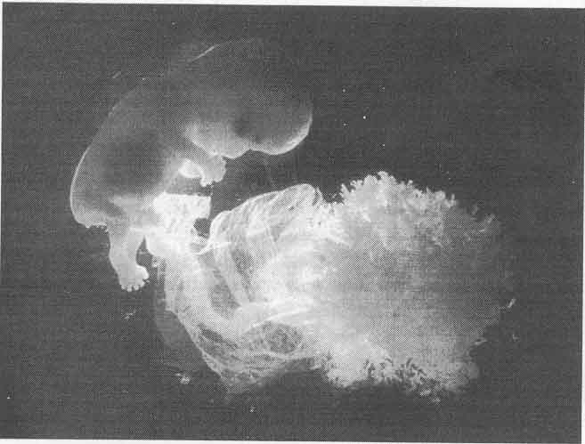 Внутренности были заполнены спермой
